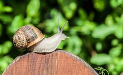 Zwalczanie ślimaków w ogrodzie. Sprawdzone sposoby na ślimaki
