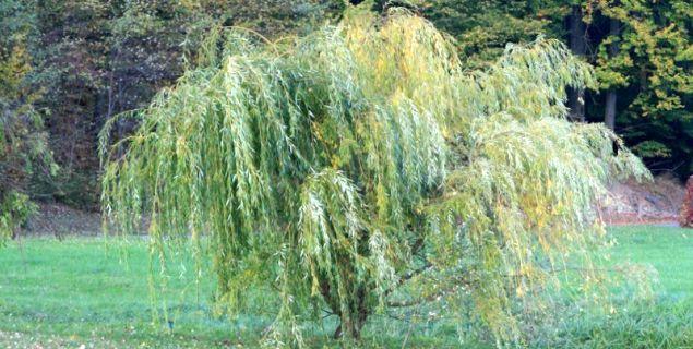 Cięcie pielęgnacyjne, formujące, korygujące i odmładzające. Jak dobrze ciąć drzewa i krzewy
